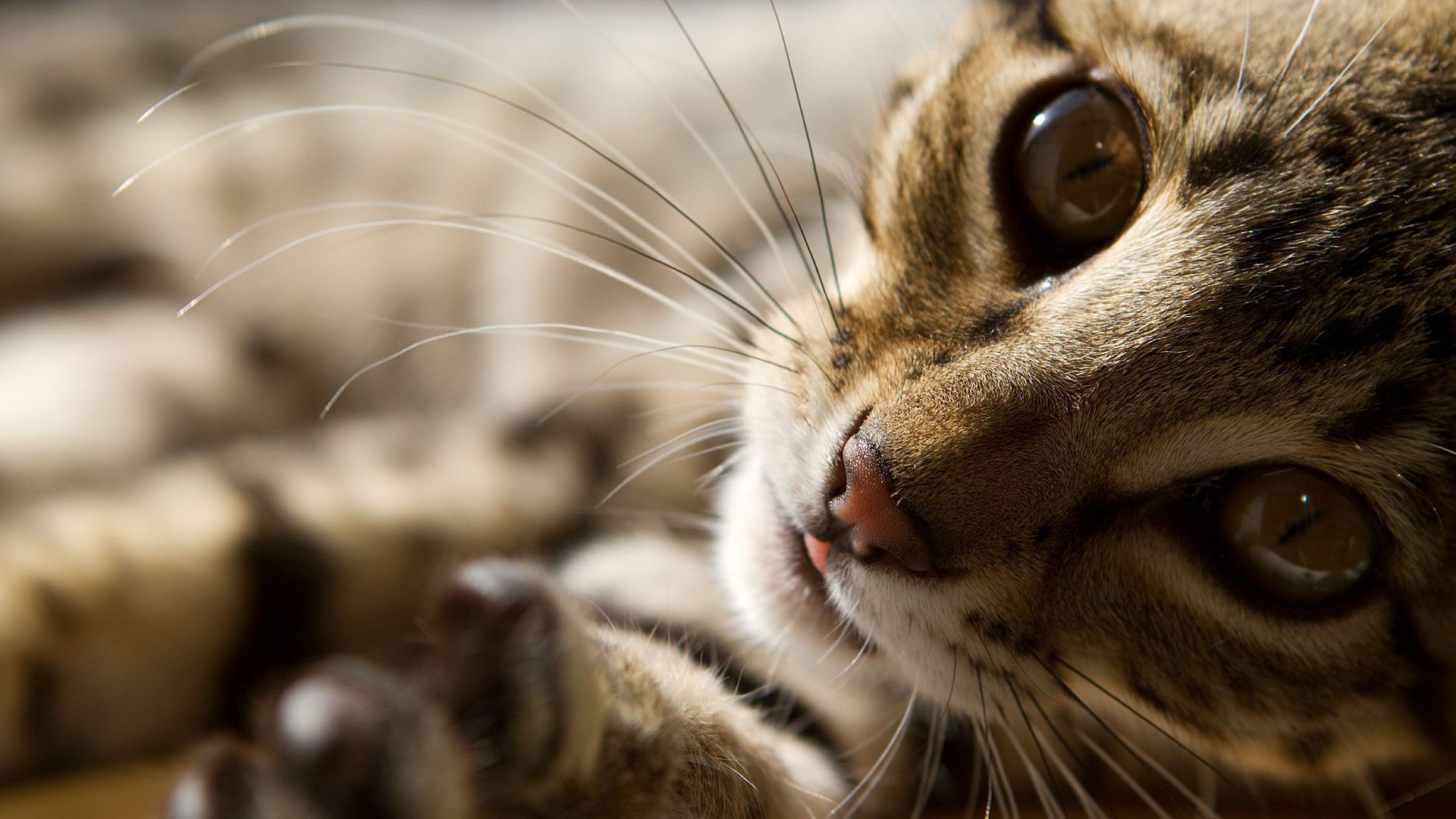 PENSION POUR CHATS & CHATTERIE